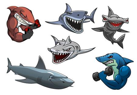 pez martillo: Cartoon enojado tiburones peligrosos personajes, incluyendo tiburones divertirse, búsqueda grises, tiburones blancos y martillo aisladas sobre fondo blanco
