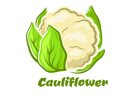 head of cauliflower: Cauliflower vegetable in cartoon style with cabbage head and fresh green leaves isolated on white background for food or healthy nutrition design