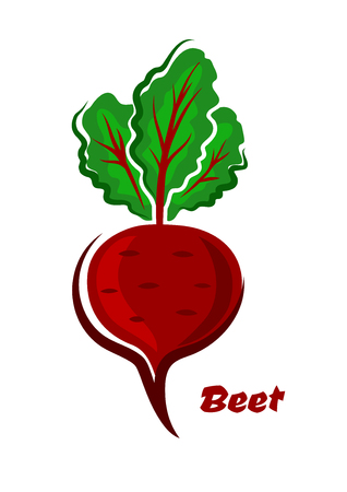 beet root: Fresh cartoon beet or beetroot vegetable with green leaves and text below,  isolated on white background, for cook or food concept design Illustration