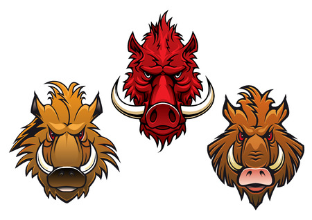 menacing: Cartoon fierce wild boar characters with menacing curved tusks and irate eyes