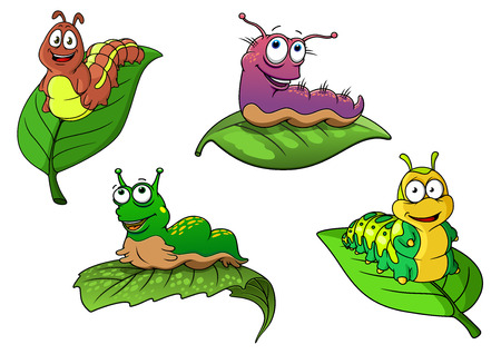 caterpillars: Cute cheerful cartoon caterpillars characters on fresh green leaves, isolated on white background Illustration