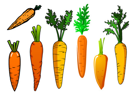 cartoon carrot: Fresh isolated orange carrot vegetables with lush green leaves for food and nutrition design Illustration
