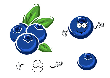 whortleberry: Cartoon fresh and funny blueberry characters  with happy face and little hands isolated on white background