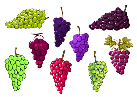 grapes on vine: Bunches of sweet green and red grapes, isolated on white background, for natural food or agriculture design