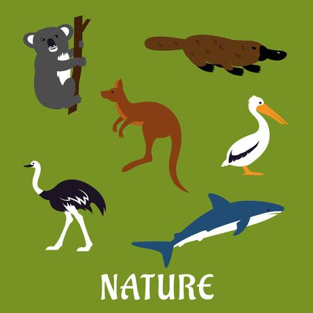 kangaroo: Australian native animals and birds icons in flat style with platypus, emu, kangaroo, koala, pelican and white shark with caption Nature Illustration