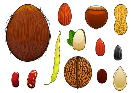 common bean: Coconut, almond, hazelnut, pistachio, coffee bean, whole and peeled peanuts, sunflower and pumpkin seeds, walnut, common beans with pod isolated on white. Cartoon style Illustration