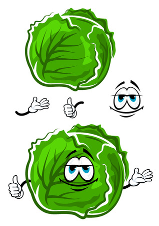cabbage: Spring fresh cabbage vegetable cartoon character covered with green leaves showing thumb up gesture, for vegetarian food or agriculture design