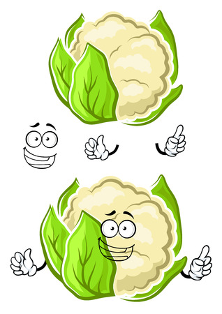 tightly: Happy healthy cartoon white cauliflower vegetable character with tightly wrapped green leaves and toothy smile, for vegetarian food, cooking or agriculture design Illustration