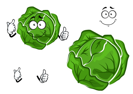 cabbage: Isolated cartoon green cabbage vegetable with hands and face, for harvest or cooking concept design
