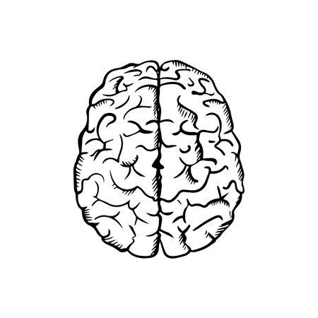 idea sketch: Human brain sketch in ouline style, isolated on white, for medicine or idea concept design