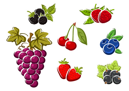 Sweet juicy berries with bunch of violet grape, strawberry, blackberry, raspberry, cherry, black currant, blueberry. Isolated on white background