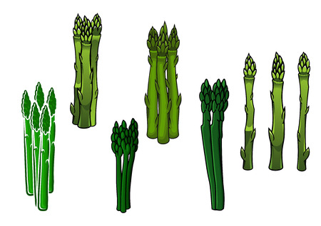 asparagus: Bunches of fresh green asparagus vegetables with fleshy sappy spears, for agriculture or healthy vegetarian food design