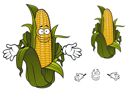 corn field: Sweet corn or maize vegetable cartoon character with rows of yellow kernels and papery thin green husks. For agriculture design