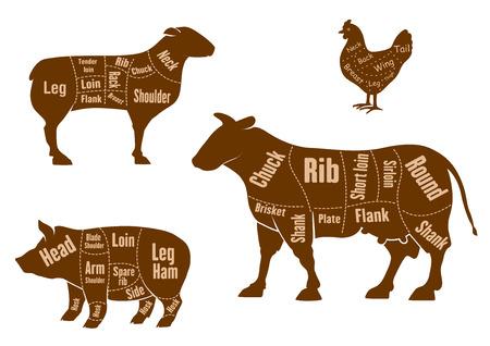 Carnicería: Pollo, carne de cerdo, carne de res y carne de cordero cortes esquema con las piezas marcadas y líneas de corte, para el diseño de carnicería