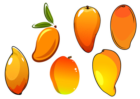 mango tree: Juicy tropical mango fruits with orange skin and green pointed leaves, for agriculture or healthy food design