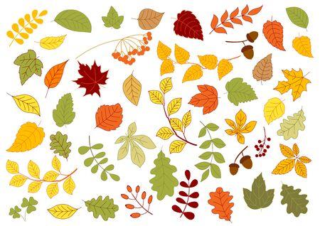 lindeboom: Esdoorn, eik, berk, linde en kruiden bladeren in rood, geel en oranje herfstkleuren