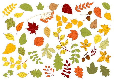 linden tree: Maple, oak, birch, linden and herbs leaves set in red, yellow and orange autumn colors