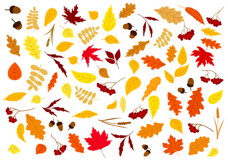 leafage: Colorful autumn leaves, herbs, berries and acorns set isolated on white. for seasonal design Illustration
