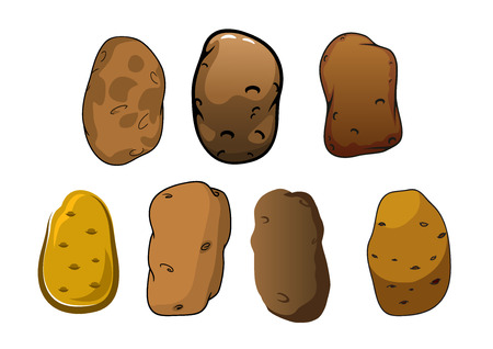 potatoes: Fresh potatoes vegetables with rough brown skin and shallow eyes isolated on white background, for healthy organic food or agriculture design Illustration