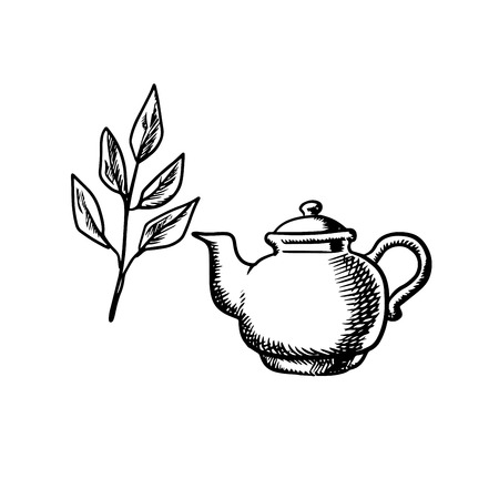 Ceramic teapot with fresh tea leaves isolated on white background, sketch style