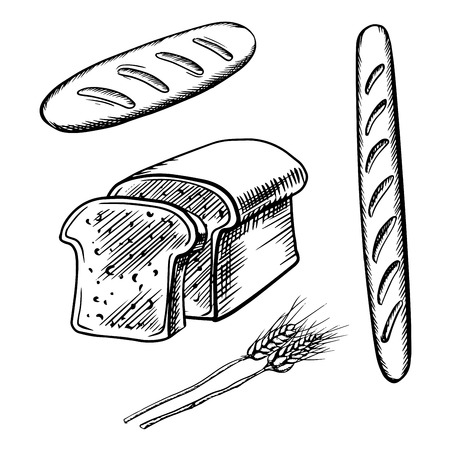 long loaf: Sketch of sliced bread, long loaf and baguette with ripe wheat ears. For healthy nutrition or bakery design Illustration