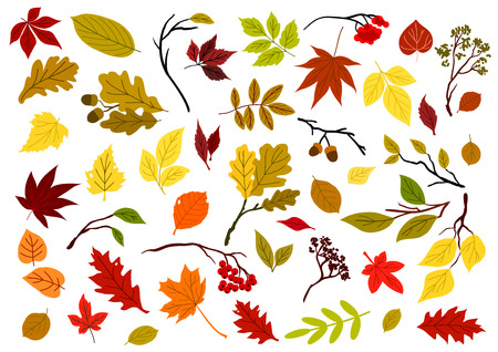 jaune rouge: Autumnal colorful red, yellow, orange, green and brown leaves, berries, acorns and herbs