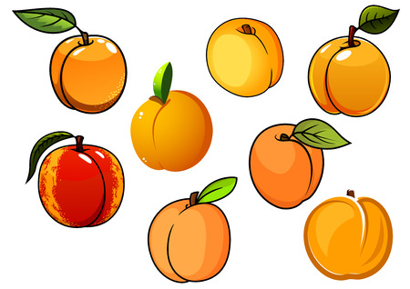 apricots: Orange sweet apricots fruits with green leaves isolated on white, for healthy food or agriculture design Illustration