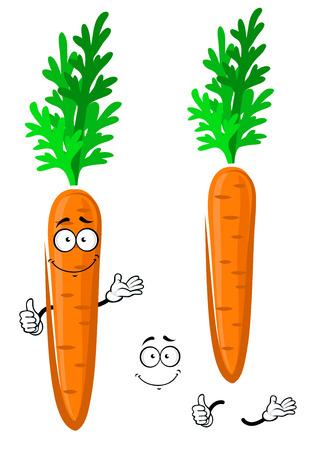 vegetable cartoon: Personaje de dibujos animados de verduras zanahoria naranja jugosa con hojas rizadas que da un pulgar encima de la muestra, para la alimentaci�n sana o el dise�o de la agricultura