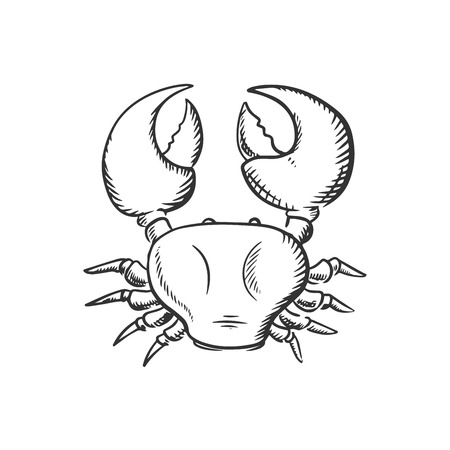 ocean view: Ocean crab top view with big claws isolated on white background, sketch style