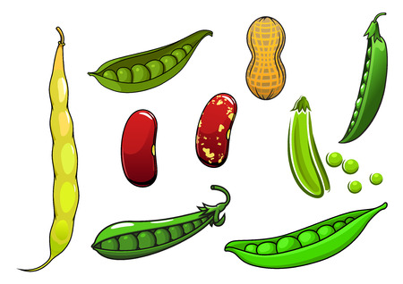 leguminosas: Cartoon legumbres y verduras frescas con los guisantes en una vaina, habas largas y rojas, maní
