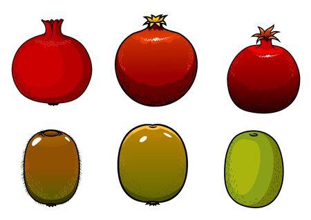 pomegranat: Green kiwi and pomegranates fruits isolated on white background Illustration
