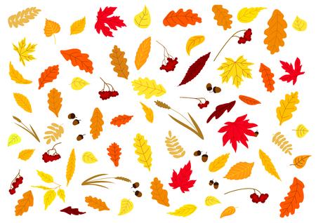 秋葉、ハーブ、ドングリおよび果実セット白で隔離。休暇の季節のデザイン