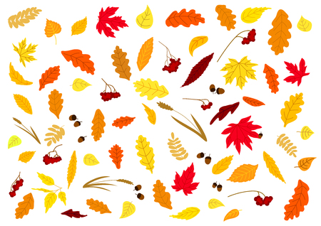 acorn: Autumnal leaves, herbs, acorns and berries set isolated on white. For holiday and seasonal design Illustration