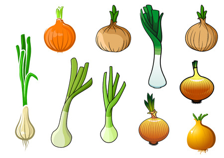bulb and stem vegetables: Golden onion bulbs with sprouted leaves, spring green onions and leek with juicy stems vegetables for agriculture, harvest or vegetarian food themes design Illustration