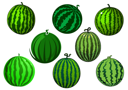 watermelon: Fresh juicy green watermelons fruits with dark green stripes and spots isolated on white