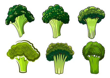 isolated: Green organic healthy broccoli vegetables with branchy stems and tight curly heads, isolated on white. For vegetarian food, cooking or agriculture design Illustration