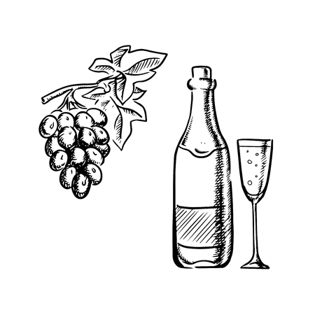 wine glasses: Champagne or sparkling wine bottle with filled glass and grapevine with bunch of grape fruits, outline sketch style