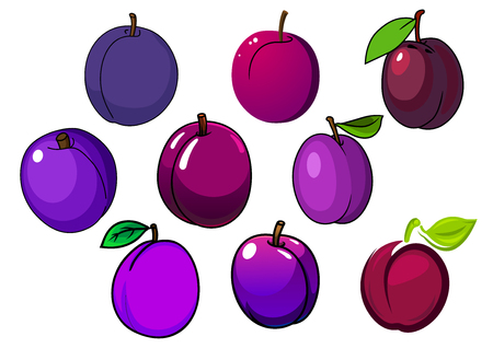 prune: Purple and violet plum fruits with glossy skin and green leaves isolated on white background, for agriculture or healthy food design