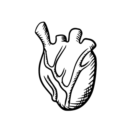 arteries: Human heart anatomy icon with detailed arteries and veins isolated on white background. For cardiology or healthcare themes  design, sketch style Illustration