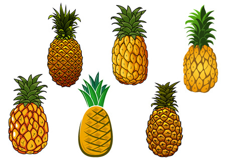 spiky: Tropical juicy yellow pineapple fruits with crowns of spiky green leaves isolated on white background