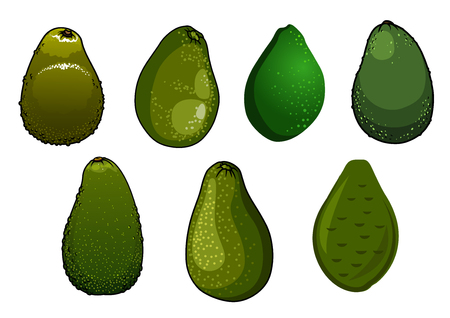 coarse: Fresh dark green avocado fruits with glossy coarse peel isolated on white background