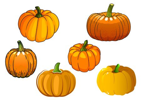 broad: Ripe autumnal orange pumpkin vegetables with broad rounded sides isolated on white background. For agriculture harvest or Halloween party design Illustration