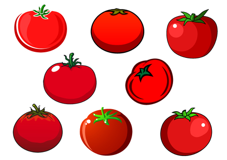 smooth: Juicy ripe red tomato vegetables with smooth shiny peel and star shaped green stems isolated on white background. For agriculture and harvest design