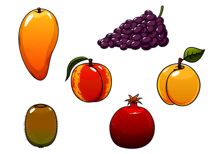 apricot tree: Juicy sweet orange mango, peach, apricot, purple grape, green kiwi and red pomegranate fruits for agriculture, harvest or healthy nutrition themes concept