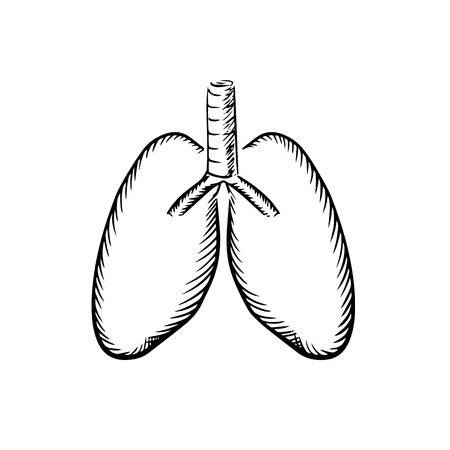 trachea: Healthy human lungs with trachea sketch icon, for medical or healthcare themes design