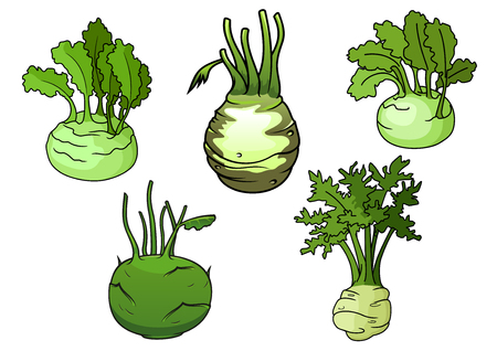 sappy: Ripe kohlrabi cabbage vegetables with sappy green leaves isolated on white background, for healthy vegetarian food or agriculture themes design Illustration