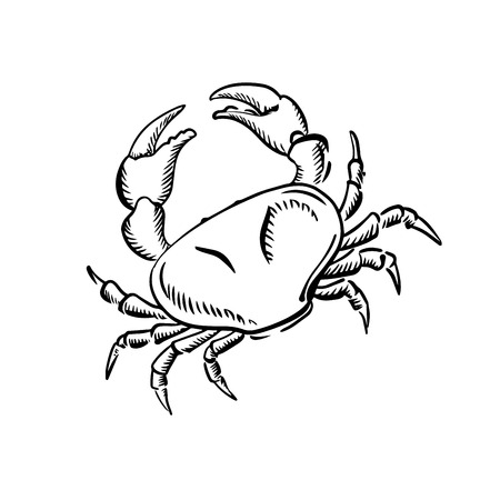 ocean view: Sketch of marine crab with raised claws, for nature or seafood theme design Illustration