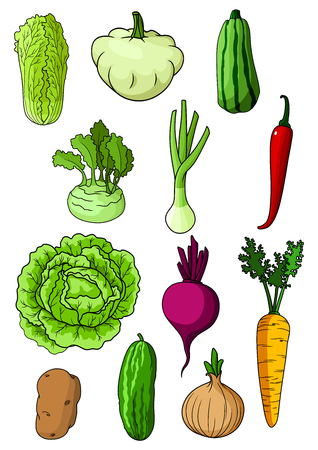 Fresh farm cabbage, cucumber, carrot, onion, potato, chili pepper, chinese cabbage, scallion, zucchini, beet, pattypan squash and kohlrabi vegetables. For vegetarian food and agriculture harvest themes