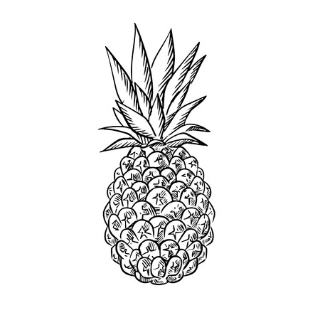 Sketch of ripe juicy tropical pineapple fruit with fresh leaves. Isolated on white Illustration