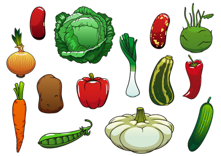 common bean: Healthy organic cabbage, carrot, pepper, potato, onion, cucumber, zucchini, pea, pattypan squash, leek, kohlrabi, common bean vegetables. For agriculture or vegetarian food themes design Illustration